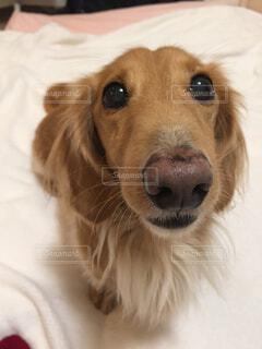 愛犬の写真・画像素材[1723273]