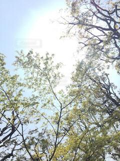 太陽の写真・画像素材[2005846]