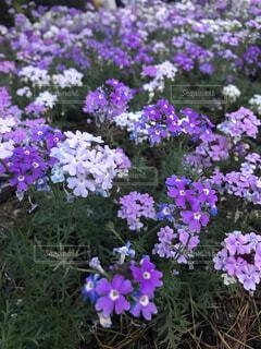 花のアップの写真・画像素材[1723611]