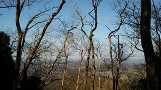 冬の枯れ木の写真・画像素材[1723729]