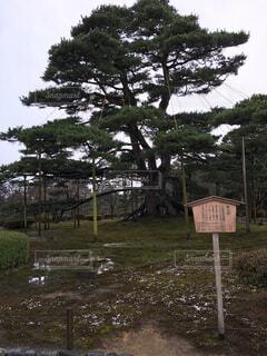 背景の木と芝生の上の記号の写真・画像素材[1736827]