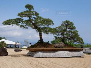 ローズガーデンの盆栽の写真・画像素材[2357665]