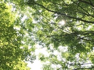 木漏れ日の写真・画像素材[1725816]
