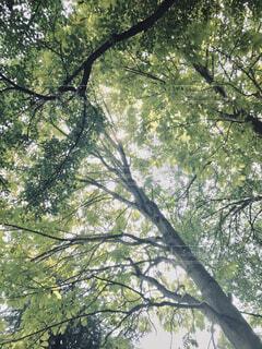 木漏れ日の写真・画像素材[1725817]