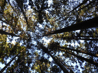 木々の写真・画像素材[1728437]