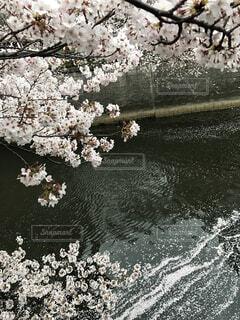 近くの花のアップの写真・画像素材[1726093]