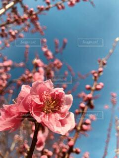 植物にピンクの花の写真・画像素材[1872722]