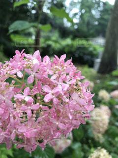 花の写真・画像素材[2003732]