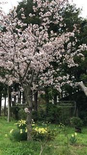 木の花の花瓶の写真・画像素材[1726230]