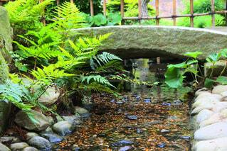 庭園の小川の写真・画像素材[1728633]