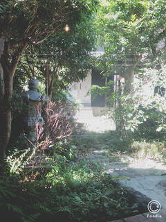 庭の木の写真・画像素材[1728637]