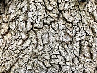 木のアップの写真・画像素材[1756157]