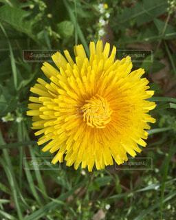 花の写真・画像素材[60668]