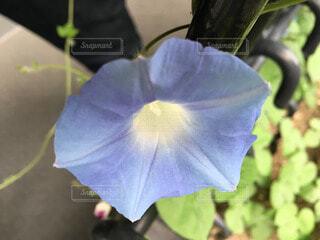 花の写真・画像素材[66583]