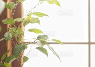 部屋の観葉植物の写真・画像素材[1728658]