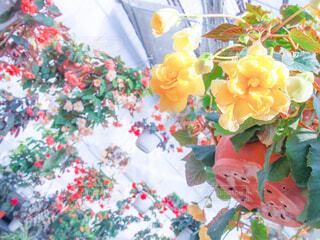 天井にぶら下がった花の写真・画像素材[1728659]