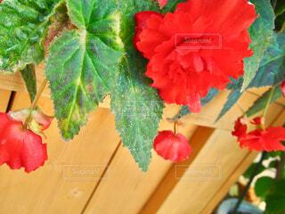 近くの花のアップの写真・画像素材[1728660]