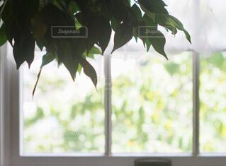 ウィンドウ上の花瓶の写真・画像素材[1728672]