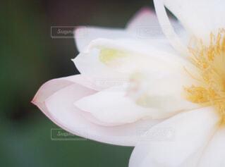 サボテンの上の白い花の写真・画像素材[1884777]