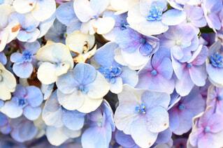 花の写真・画像素材[2044638]