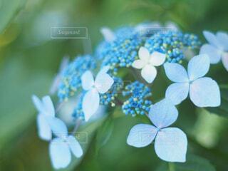 花の写真・画像素材[2044640]