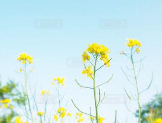 花のクローズアップの写真・画像素材[4528651]