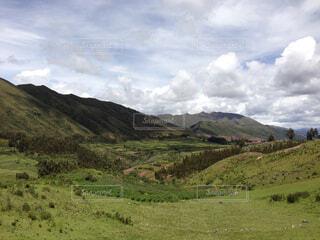 緑豊かな丘の中腹に緑の放牧牛の群れの写真・画像素材[1729667]