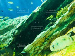 水中フォトの写真・画像素材[1730220]