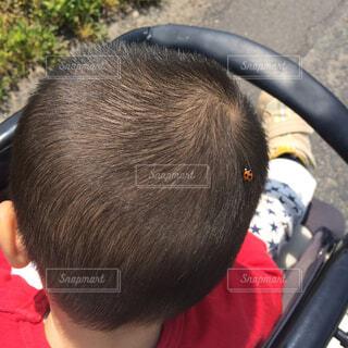 頭にてんとう虫がとまった赤ちゃんの写真・画像素材[1730878]