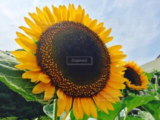 近くに黄色い花のアップの写真・画像素材[1730468]