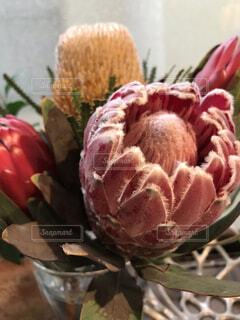 エキゾチックなお花の写真・画像素材[1732842]