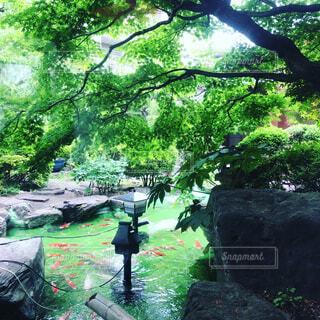 日本庭園の写真・画像素材[1733486]
