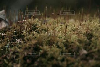 苔のアップの写真・画像素材[1730764]