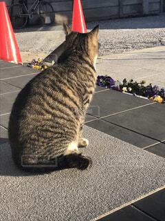 道の端に座っている猫の写真・画像素材[1734713]