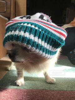 帽子をかぶった犬の写真・画像素材[1732022]