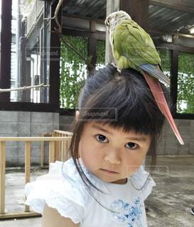 鳥と私の写真・画像素材[2247747]