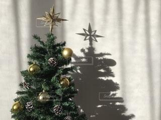 クリスマスツリーの写真・画像素材[1736023]