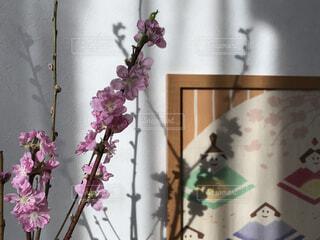桃の花の写真・画像素材[1736044]