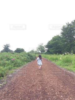 走る女の子の写真・画像素材[1736091]