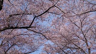 春の訪れの写真・画像素材[1780103]
