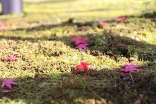 秋も終わりの写真・画像素材[1734224]