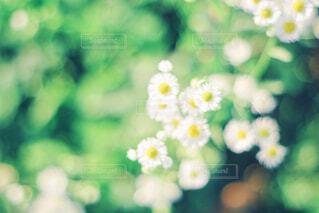 近くの花のアップの写真・画像素材[1808884]