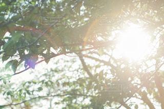 木から漏れてくる光の写真・画像素材[1808925]