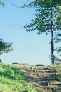 街路樹と散歩道の写真・画像素材[1808926]