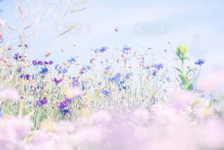 花のクローズアップの写真・画像素材[2416178]