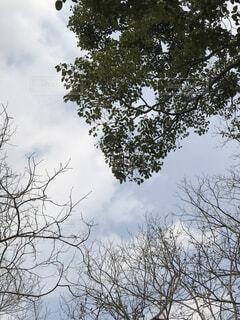 大きな木の写真・画像素材[1736030]