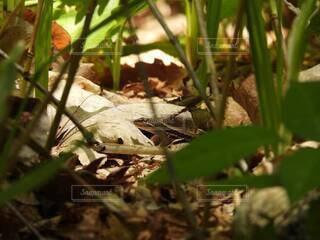 草の上に座っているカエルの写真・画像素材[4770070]