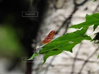 すけるとんな昆虫の写真・画像素材[4770071]