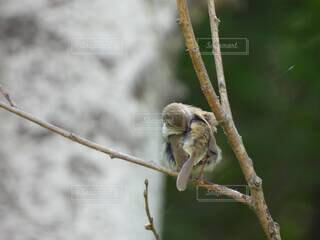 鳥の毛繕いの写真・画像素材[4770072]