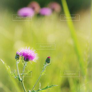 春の写真・画像素材[64028]